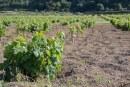 Pantelleria rende onore alla viticultura eroica dal 31 agosto al 9 settembre