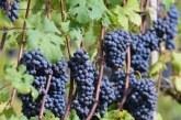 La produzione di vino in Italia tra 2017 e 2018