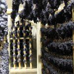 A Serrapetrona appuntamento con Appassimenti aperti per celebrare il suo prezioso vitigno