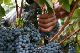 La sesta edizione del premio Gino Friedman esalta il valore del vino cooperativo