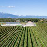 La viticoltura sostenibile in Friuli Venezia Giulia