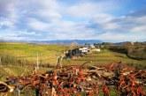 Cantarutti Alfieri vini che si ricordano