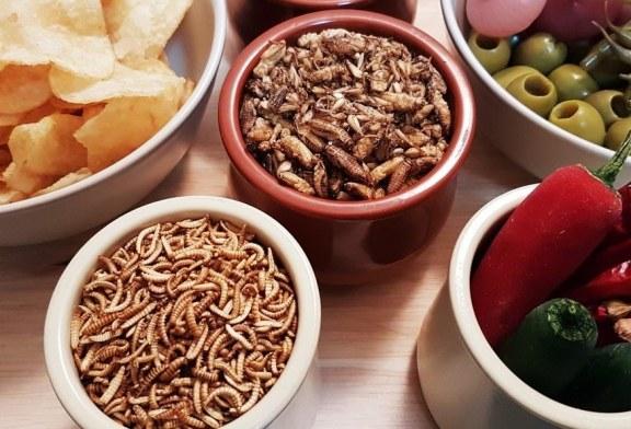 Piatto di insetti: chi se ne ciberà?