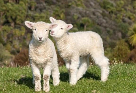 Tradizione, animalismo, ecologismo: a Pasqua il solito problema ma quest'anno qualcosa in più