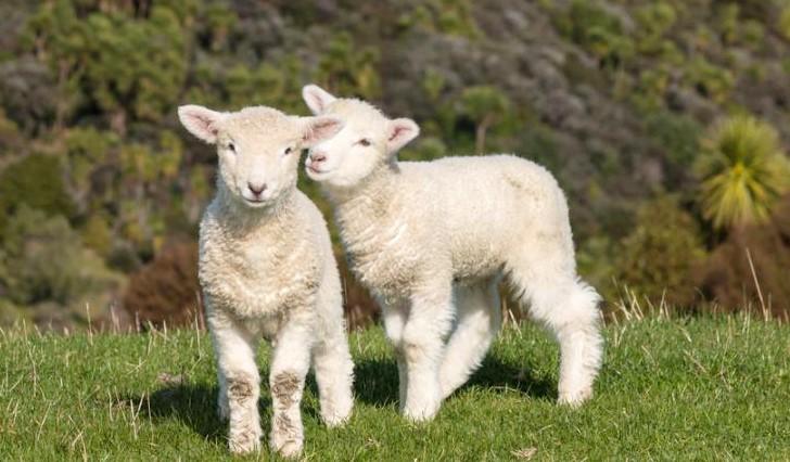 Photo of Tradizione, animalismo, ecologismo: a Pasqua il solito problema ma quest'anno qualcosa in più