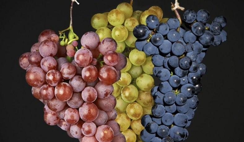 L'Italia del vino può contare su aziende con fatturato in crescita