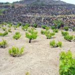 Convegno UGIVI a Pantelleria 1° Giugno 2019