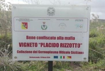 Con IRVO la viticultura Siciliana sperimenta il futuro