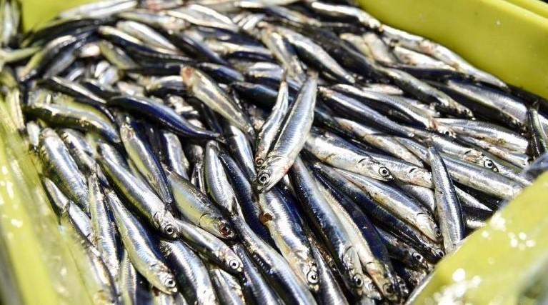 Anche la burocrazia uccide la pesca