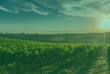I cambiamenti del clima si sposta a nord la produzione del vino
