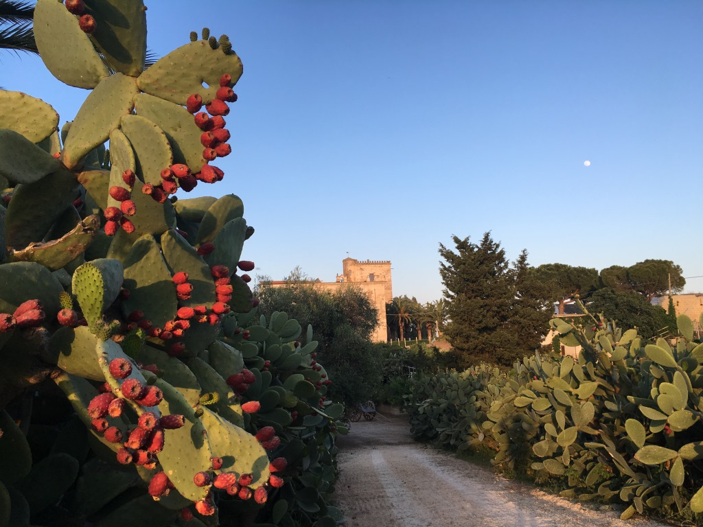 Relax e scoperta nella Puglia più autentica e genuina
