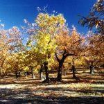 #AmiatAutunno, in una Toscana da scoprire un viaggio tra tradizione e gusto