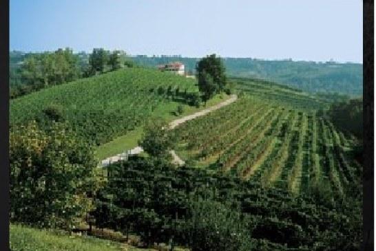 Al via la prima vendemmia del prosecco sulle colline dell'Unesco