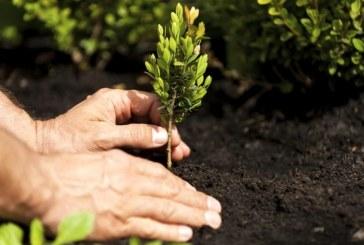 Cambiamenti climatici, consumo del suolo e piantature di alberi