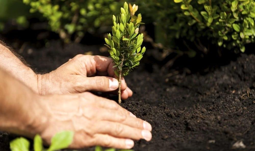 Photo of Cambiamenti climatici, consumo del suolo e piantature di alberi