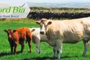 Carne irlandese apprezzata in Italia e Bord Bia lancia un concorso