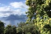 Il Marrone Dop di San Zeno di Montagna