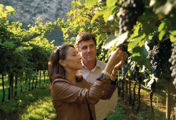 Primato italiano e mondialeper il Pinot grigio delle Venezie