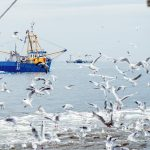 Pesca e sostenibilità certificata MSC. Un esempio in Italia