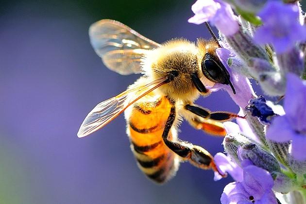 Salvare le api, approvato in Italia un Progetto