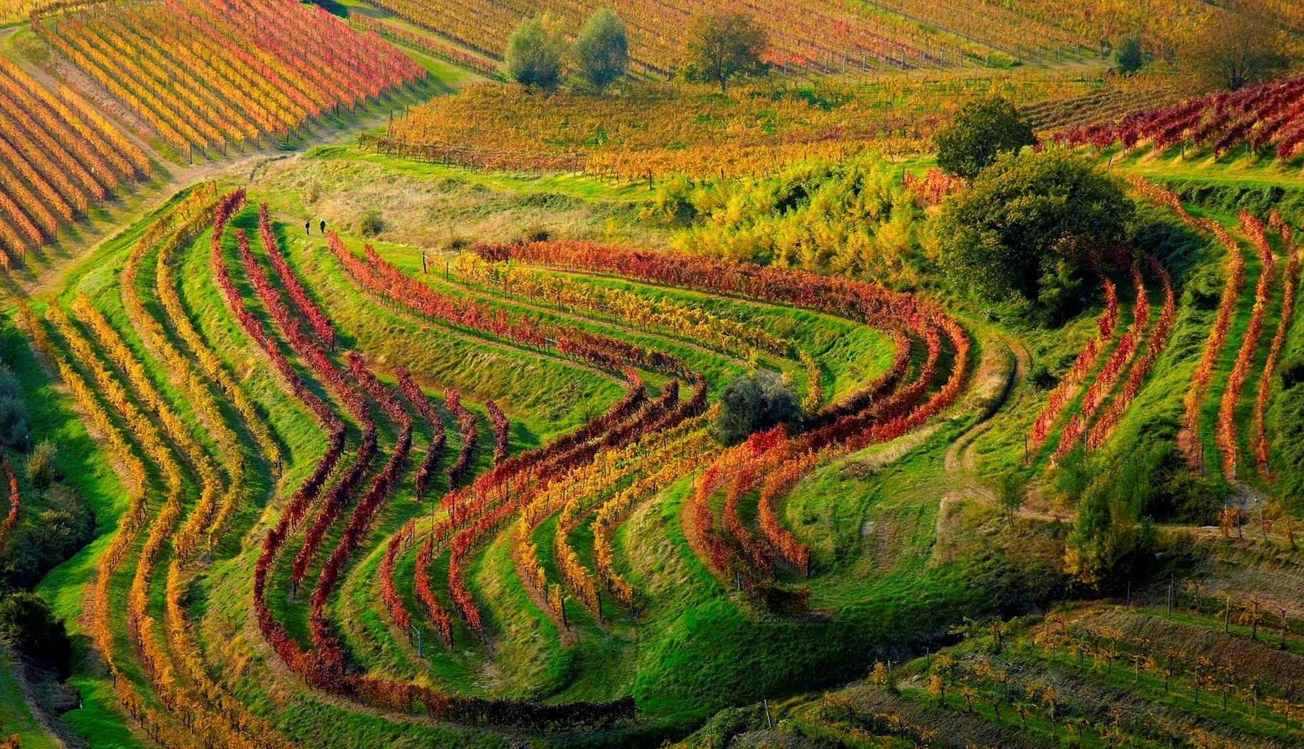 Il Consorzio Tutela Vini Friuli Venezia Giulia è formalmente riconosciuto