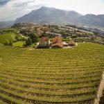 Riscopriamo i vitigni autoctoni.L'esempio virtuoso del Trentino