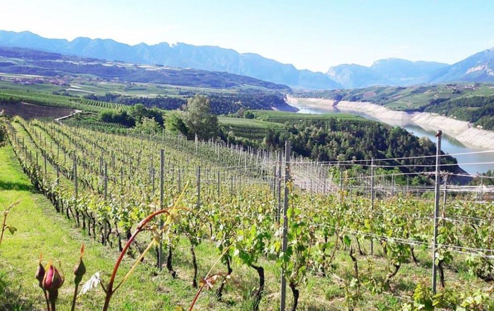 L' ottimo vino dei Colli Bolognesi rischia di restare nelle cantine