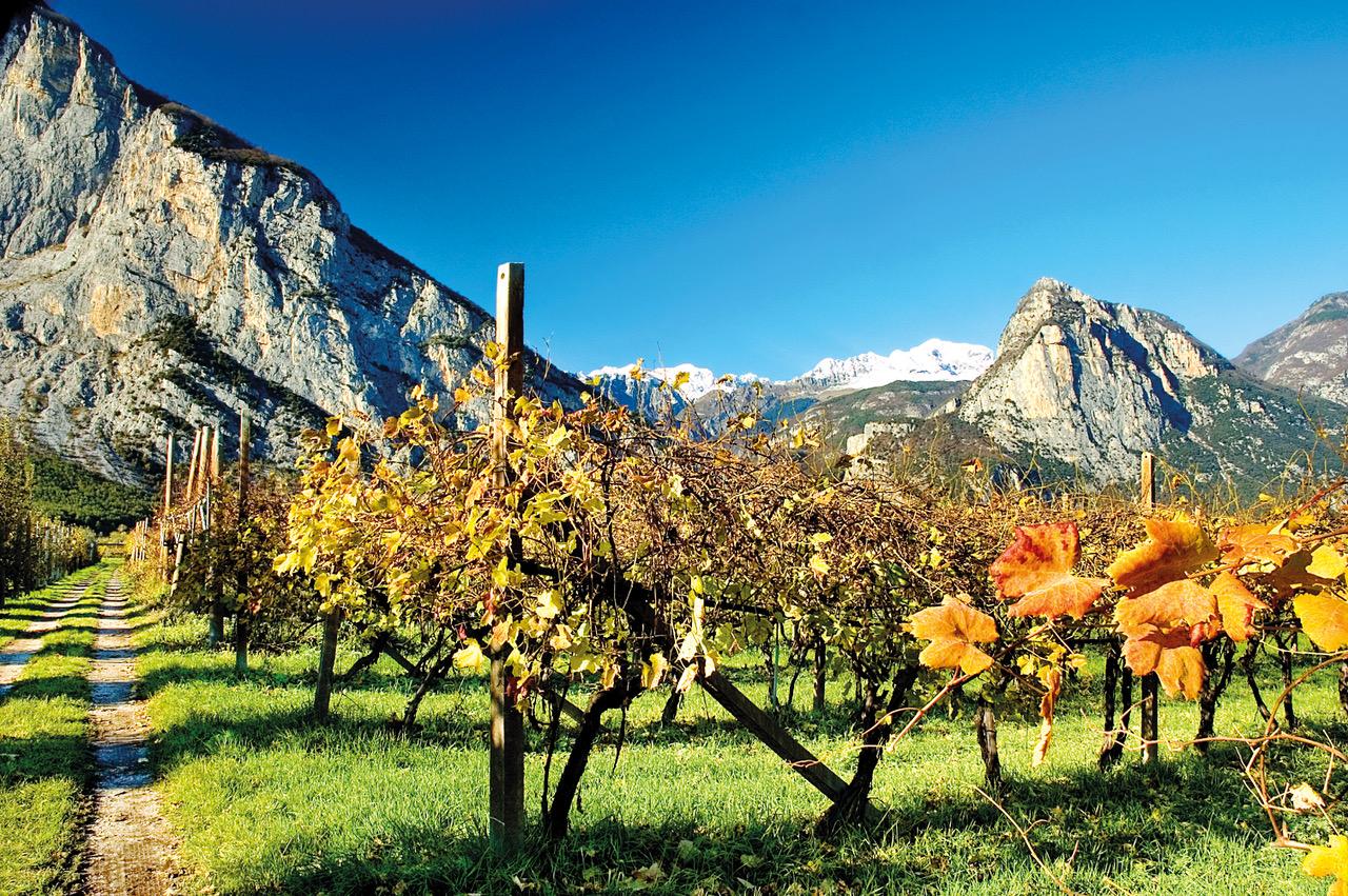 Photo of I mercati asiatici per il vino italiano: Cina e Corea del Sud