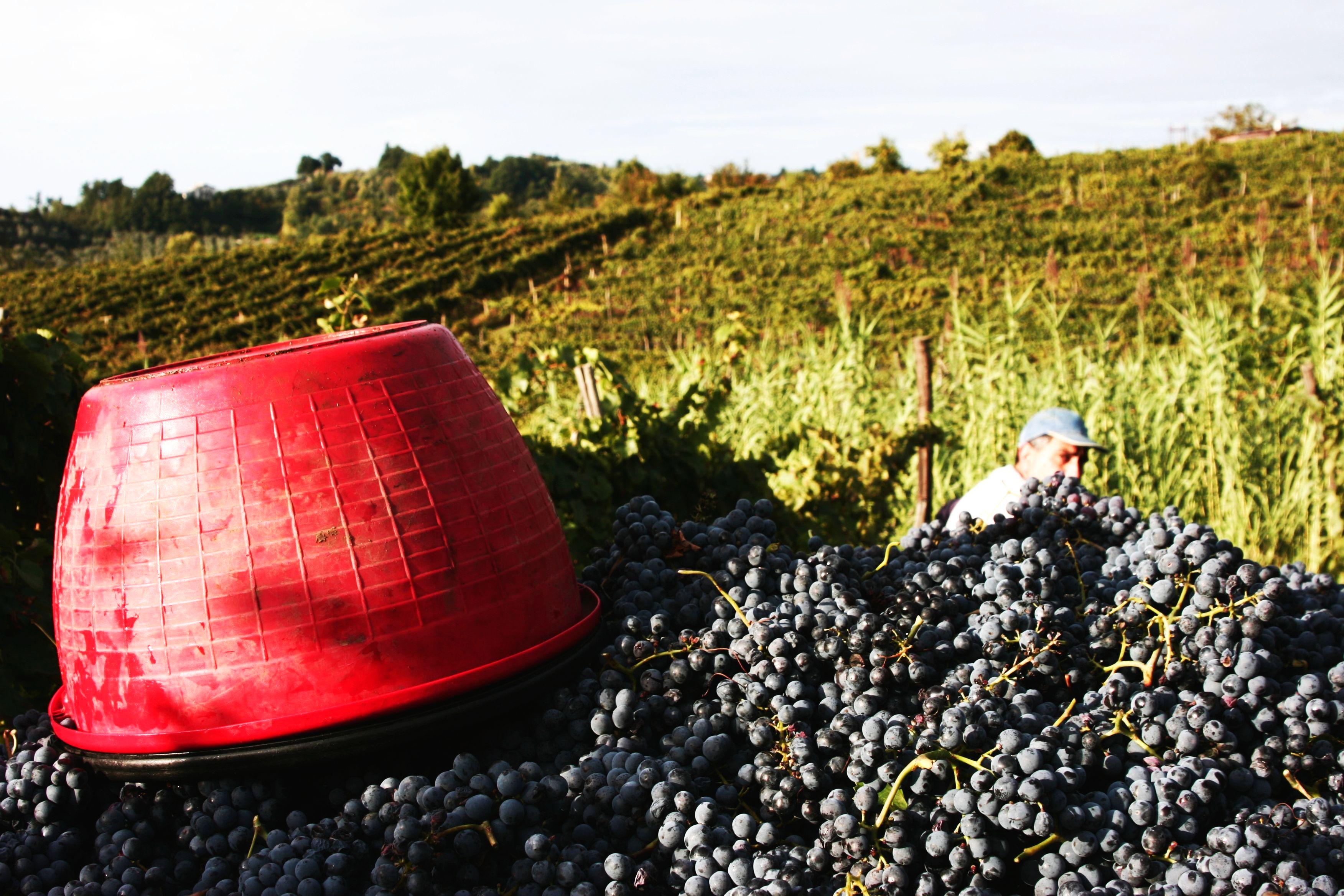 Appunti e curiosità sul Vino Italiano