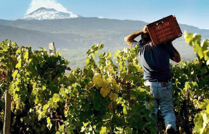 La Cantina di Efesto i vini dell'Etna e del Vulcano Laziale si incontrano a Giarre