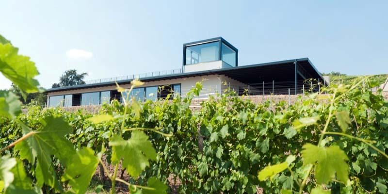 Photo of Hic et Nunc tra vigne e vino, quando si vuole vedere una magia