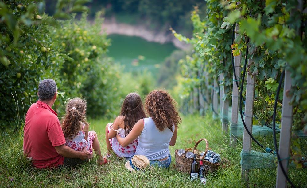 Photo of Adotta un filare del più antico vitigno di montagna del Trentino