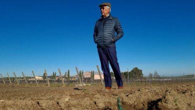 Photo of Puglia: rubate 35.000 barbatelle alla Cantina Rivera