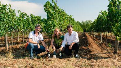 Photo of CantinAmena e le riscoperte  possibilità della viticoltura Laziale